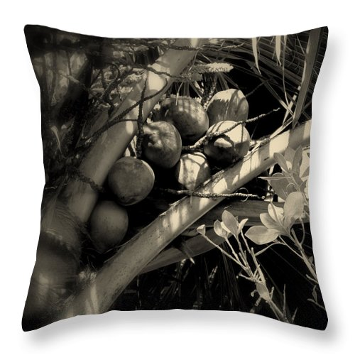 Coconuts Throw Pillow featuring the photograph Coconuts by Susanne Van Hulst