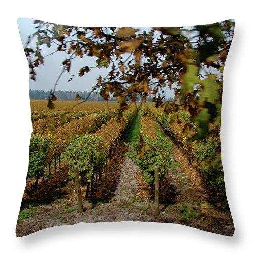 Colchagua Throw Pillow featuring the photograph Colchagua Valley Vineyard by Brett Winn