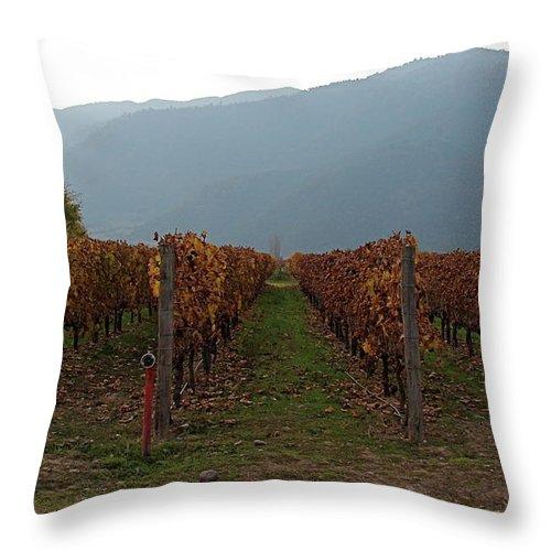 Colchagua Throw Pillow featuring the photograph Colchagua Valley Vinyard II by Brett Winn