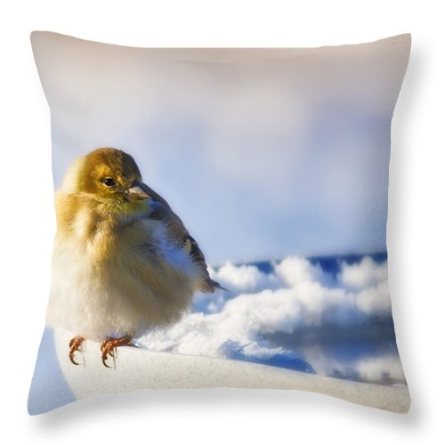 American Goldfinch Throw Pillow featuring the photograph Cold American Goldfinch by Al Mueller