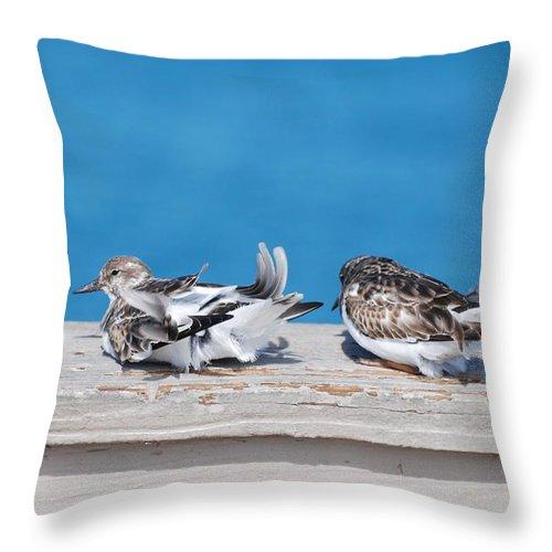 Bird Throw Pillow featuring the photograph Cold Birds by Rob Hans