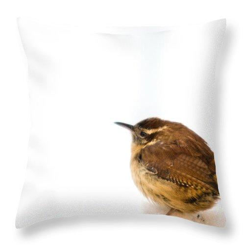 Cumberand Throw Pillow featuring the photograph Cold Carolina Wren by Douglas Barnett