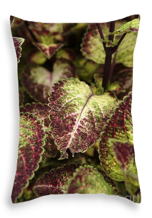 New England Throw Pillow featuring the photograph Coleus Plant by Erin Paul Donovan