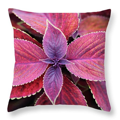 Solenostemon Throw Pillow featuring the photograph Coleus Red Rosie by Neil Overy