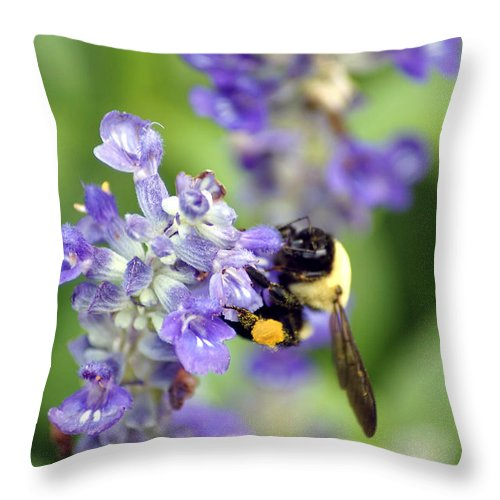Flowers Throw Pillow featuring the photograph Collection Of Pollen by Donna Bentley
