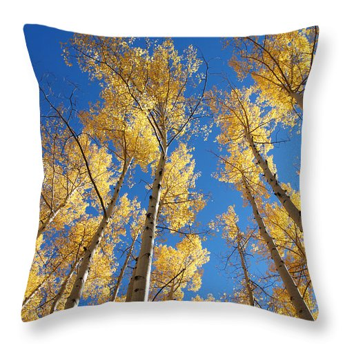 Aspen Throw Pillow featuring the photograph Colorado Aspen by Jerry McElroy