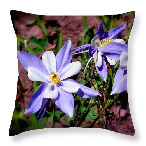 Columbine Throw Pillow featuring the photograph Colorful Columbine by Jill Myers