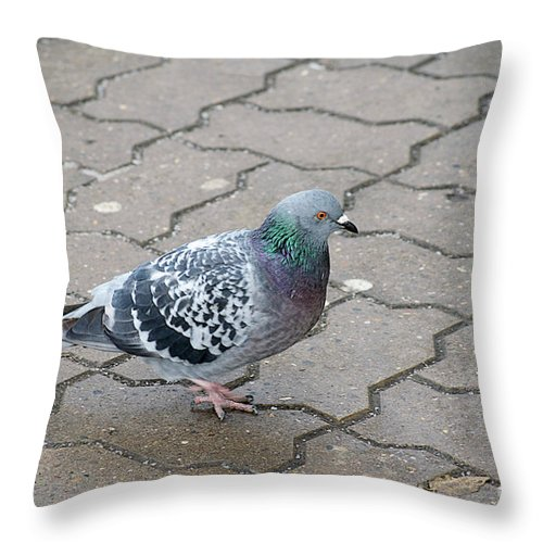Dove Throw Pillow featuring the photograph Colorful Dove by Elvira Ladocki