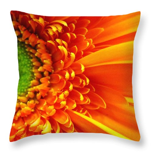 Red Throw Pillow featuring the photograph Colors Galore by Rhonda Barrett