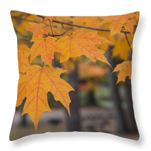 Color Throw Pillow featuring the photograph Colors Of Fall by Jordan Smith
