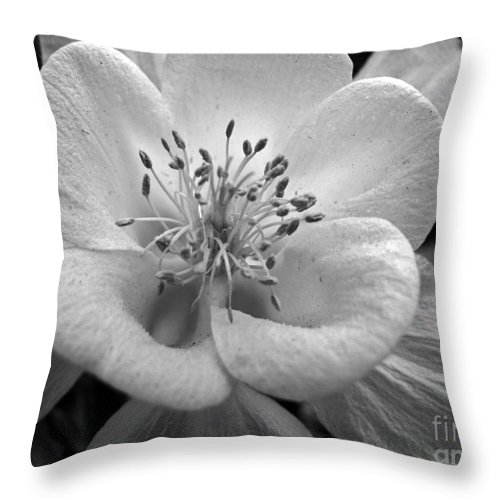 Flowers Throw Pillow featuring the photograph Columbine by Amanda Barcon