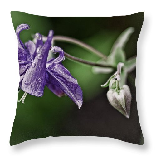 Columbine And Heart Throw Pillow featuring the photograph Columbine And Heart by Chris Fleming