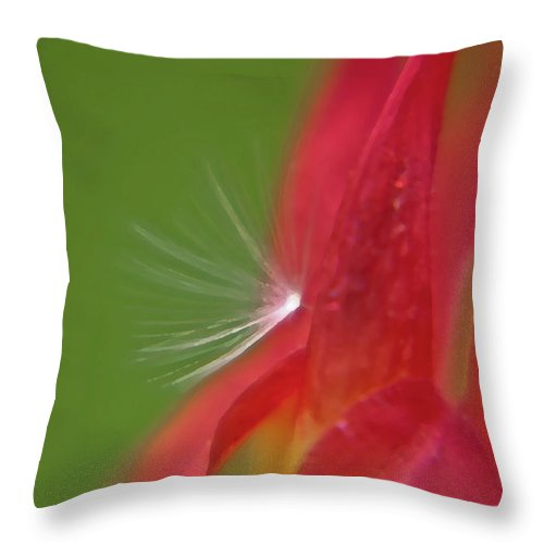 Flowers Throw Pillow featuring the photograph Columbine Fair by Brenda Jacobs