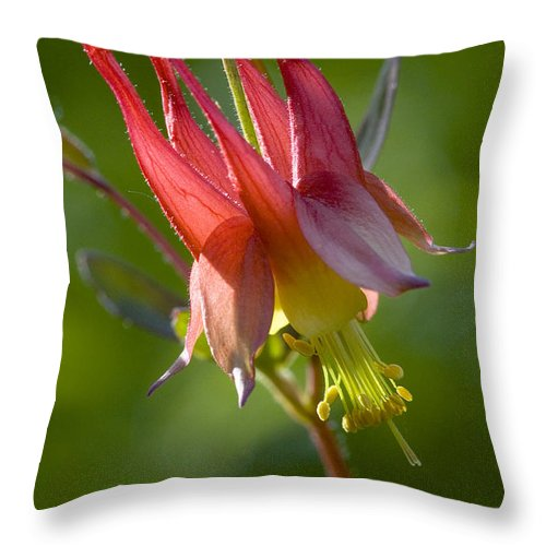 Wildflower Throw Pillow featuring the photograph Columbine by Linda McRae