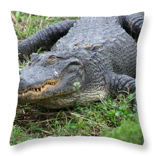 Animal Throw Pillow featuring the photograph Come Closer I Don't Bite by David Dunham