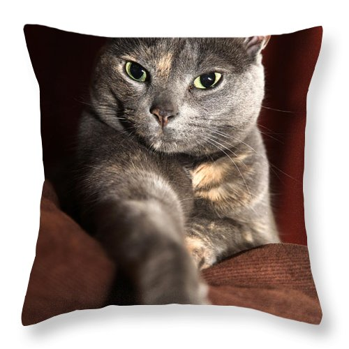 Kitty Throw Pillow featuring the photograph Come Here by Amanda Barcon