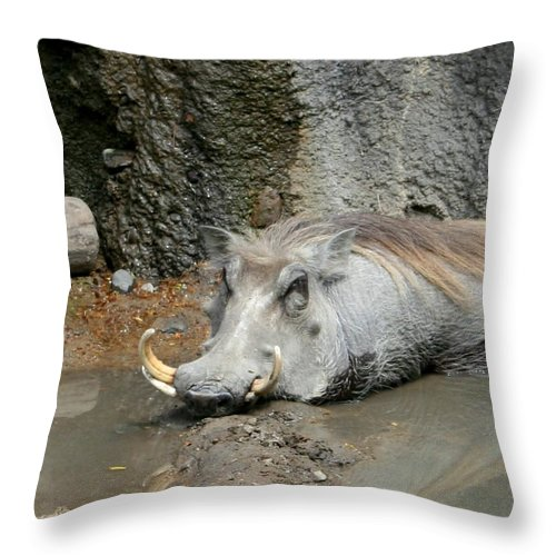 Hog Throw Pillow featuring the photograph Come On In The Waters Fine by David Dunham