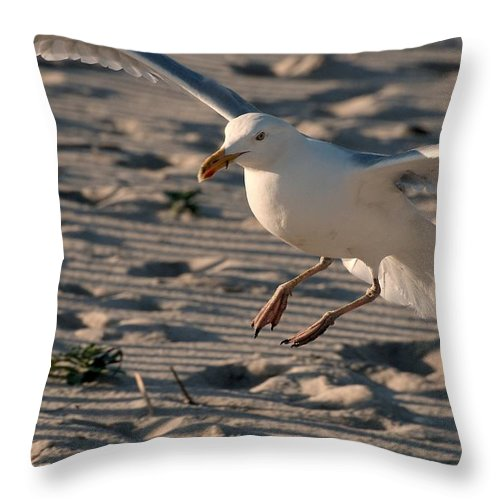 Jersey Shore Throw Pillow featuring the photograph Coming In For A Landing - Jersey Shore by Angie Tirado