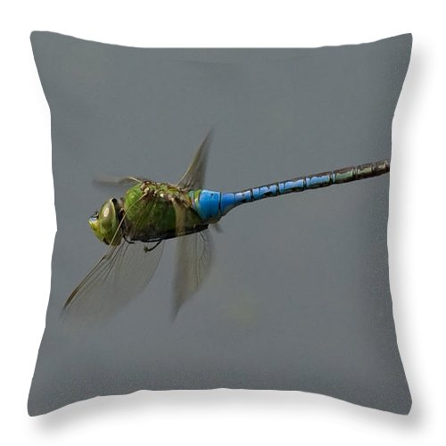 Dragonfly Throw Pillow featuring the photograph Common Darner All Of A Hover by Bob Kemp
