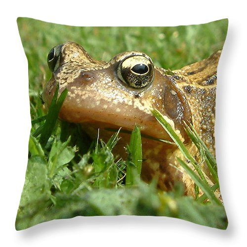 Amphibian Throw Pillow featuring the photograph Common Frog Rana Temporaria by Mike Lester