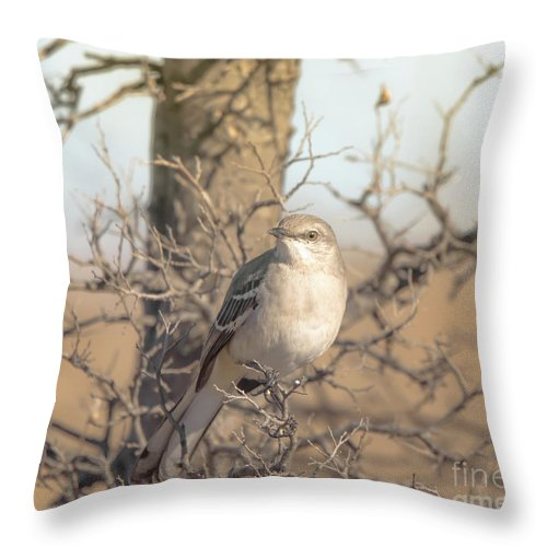 Avian Throw Pillow featuring the photograph Common Mockingbird by Robert Frederick