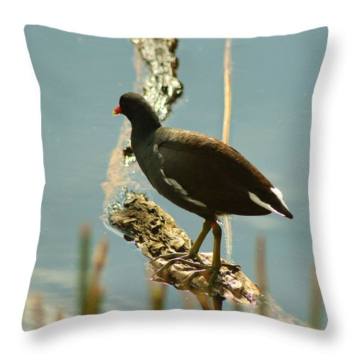 Common Moor Hen Throw Pillow featuring the pyrography Common Moor Hen by Sally Sperry
