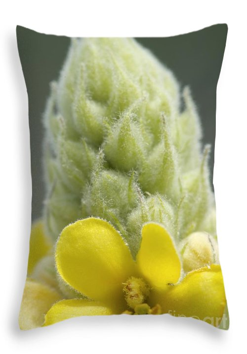 New England Throw Pillow featuring the photograph Common Mullein - New England by Erin Paul Donovan