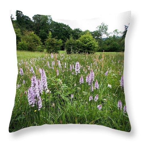 Orchid Throw Pillow featuring the photograph Common Spotted Orchids by Bob Kemp