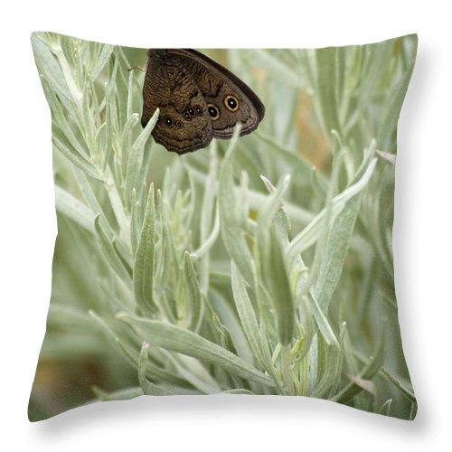 Butterfly Throw Pillow featuring the photograph Common Wood Nymph by Chad Davis