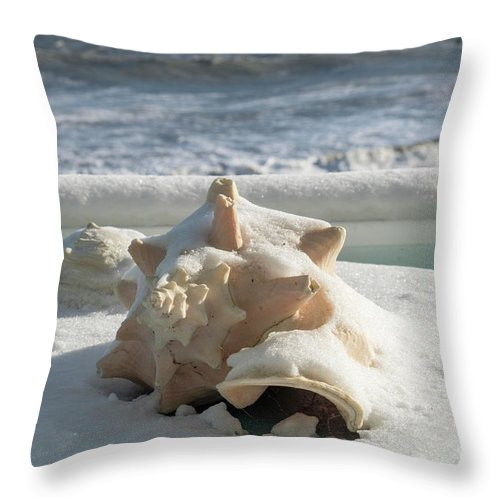 Conch Throw Pillow featuring the photograph Conch Shell In Snow by Carol Bilodeau
