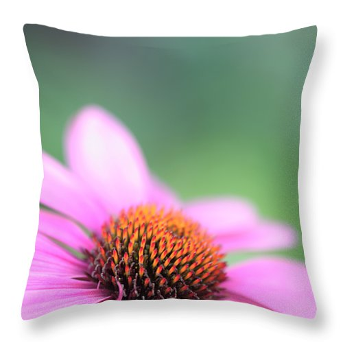 Cone Throw Pillow featuring the photograph Cone Flower 2 by Neil Overy