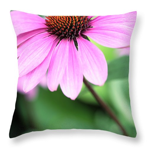 Cone Throw Pillow featuring the photograph Cone Flower 3 by Neil Overy