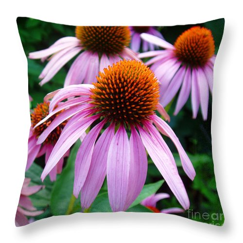 Coneflowers Throw Pillow featuring the photograph Three Coneflowers by Nancy Mueller