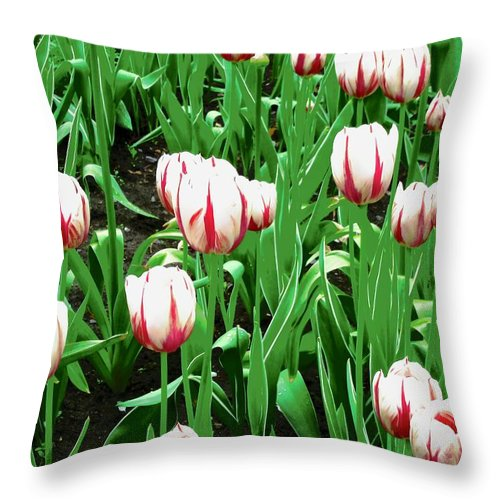 Tulips Throw Pillow featuring the photograph Confederation Tulips by Stephanie Moore