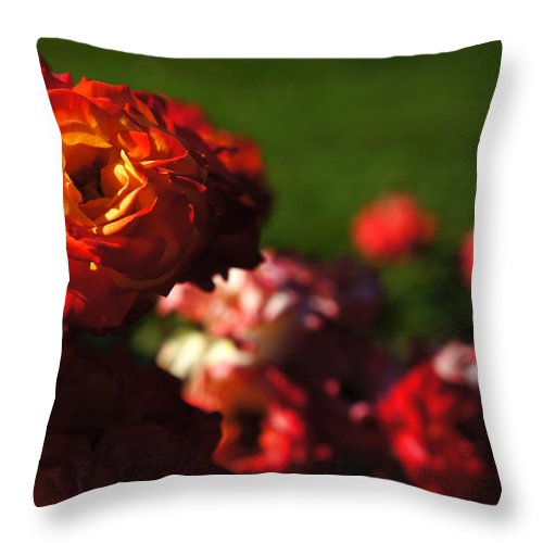 Throw Pillow featuring the photograph Confetti Roses by Helene Fallstrom