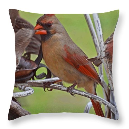 Nature Throw Pillow featuring the photograph Confrontation by Debbie Portwood
