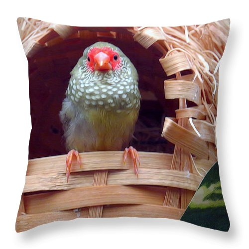 Animals Throw Pillow featuring the photograph Confusion by Carolyn Fletcher