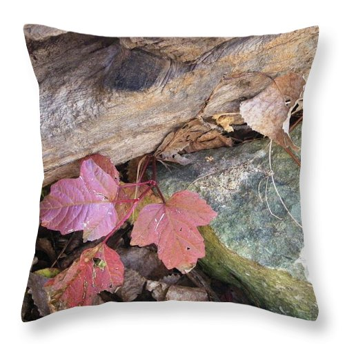 Nature Throw Pillow featuring the photograph Congruence by Peggy King