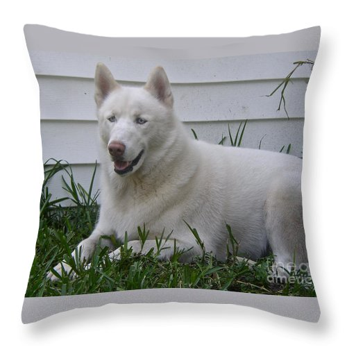 Pet Throw Pillow featuring the photograph Connor II by Carol Bradley