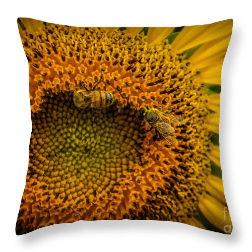 Summer Throw Pillow featuring the photograph Construction Crew by Janice Pariza