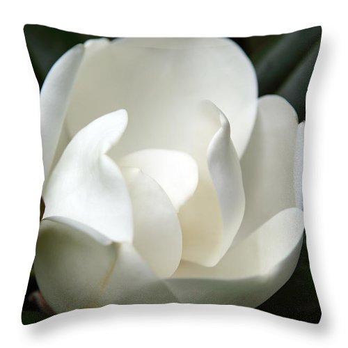 Magnolia Throw Pillow featuring the photograph Container by Amanda Barcon