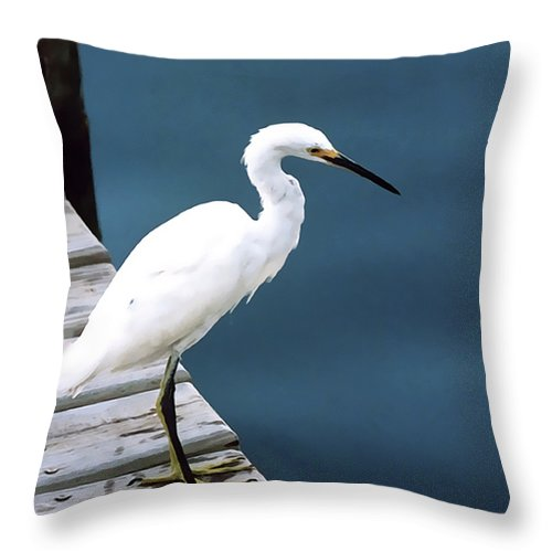 Bird Throw Pillow featuring the photograph Contemplation by Terry Fiala