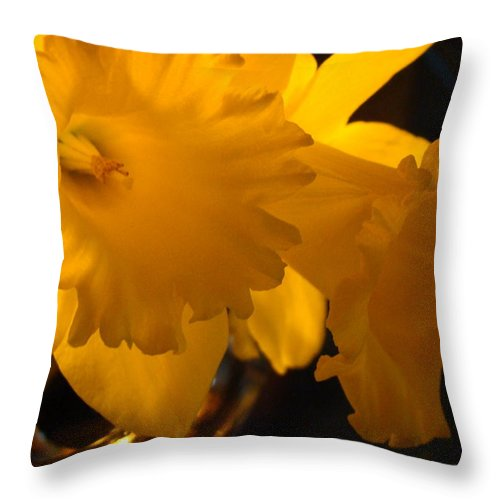 �daffodils Artwork� Throw Pillow featuring the photograph Contemporary Flower Artwork 10 Daffodil Flowers Evening Glow by Baslee Troutman