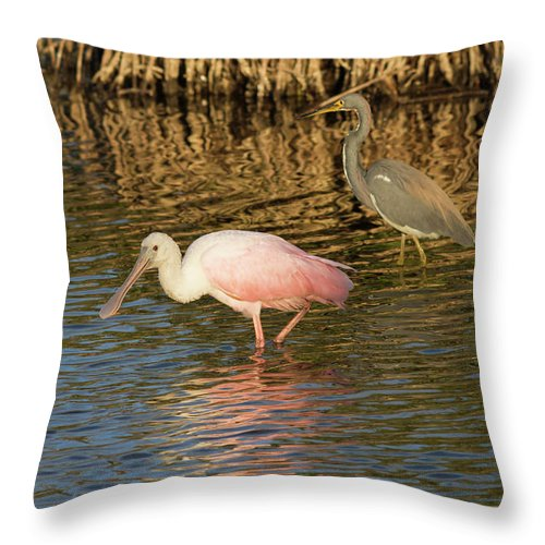 Cutts Nature Photography Throw Pillow featuring the photograph Contrasting Colors by David Cutts