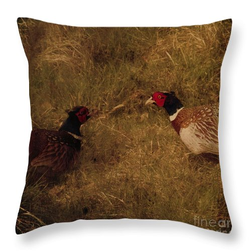 Pheasant Throw Pillow featuring the photograph Conversations by Angel Ciesniarska
