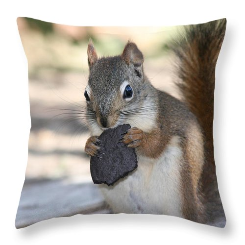 Cookie Squirrell Nature Wild Animal Chocolate Food Camping Outdoors Throw Pillow featuring the photograph Cookie Monster by Andrea Lawrence