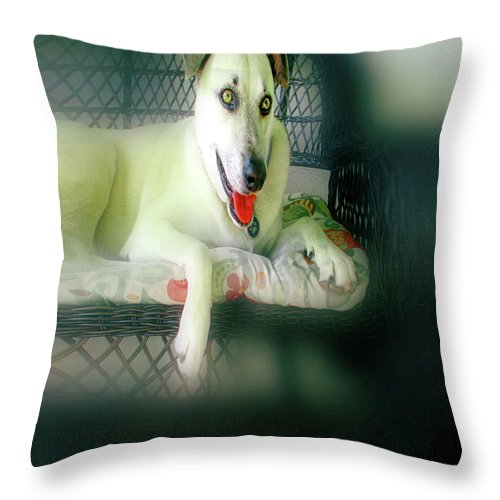 Greeting Cards Throw Pillow featuring the digital art Cooper Goes Cuter Artwork 9 by Miss Pet Sitter