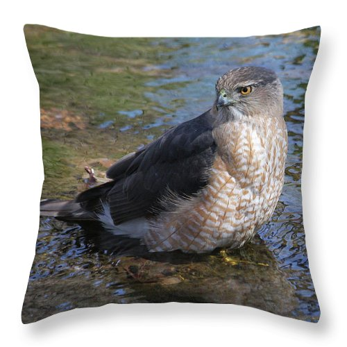Cooper's Hawk Throw Pillow featuring the photograph Cooper's Hawk by Doris Potter