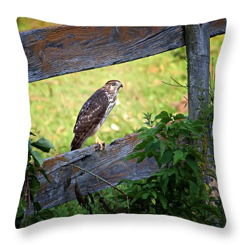 Hawk Throw Pillow featuring the photograph Coopers Hawk Perched On A Weathered Fence by Al Mueller