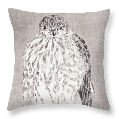 Hawk Throw Pillow featuring the drawing Coopers Hawk by Shevin Childers